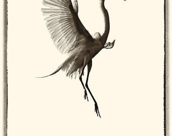 Egret in sepia and black
