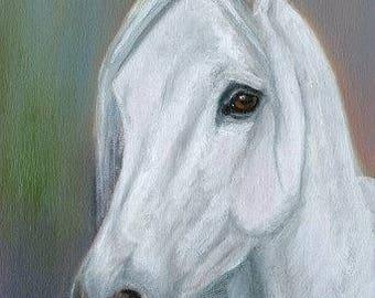 White Arabian Horse Original Oil Painting
