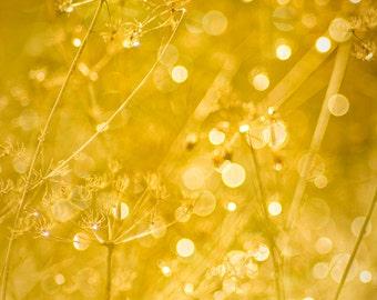 Golden Yellow Dew drops sparkle in sunlight