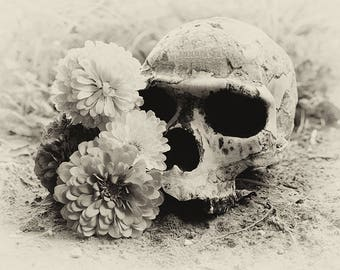 The Sands of Time ~ Skull and Flowers Photography Print ~ Oddities ~ Memento Mori ~ Day of the Dead ~ Fine Art Photography ~ Gothic Decor