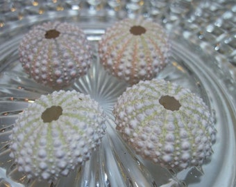 Private Listing for idooceanfairydrifter  Mini Shells - Unique Creatures