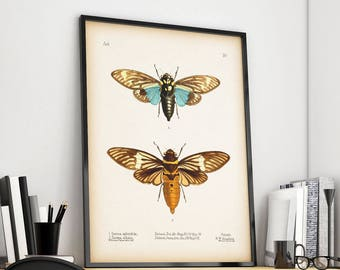 Cicada print, Entomology print, Instant download printable art, Cicada wall art, Vintage insect print, Insect art print, 8x10, 11x14