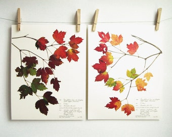 Maple Leaves Print Set; fall decor botanical print pressed leaves art thanksgiving decor autumn home decor red fall leaves art 8x10 217ab