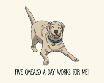Labrador Greetings card: Five (Meals) a day works for me!
