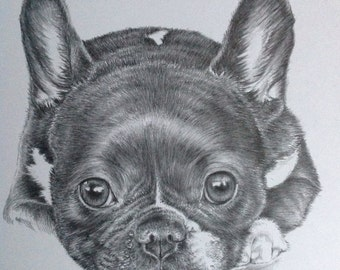 Custom Dog Portrait Example in Pencil - Pet PortraitPet Commissions - Christmas Gift