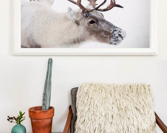 Large Photography Reindeer in the Snow Winter Wonderland Nature Print