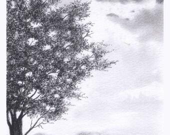 Black Olive Tree Pencil Drawing