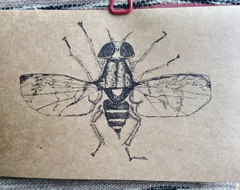 Handmade Insect Greeting Cards, Recycled Paper, The Vagrant Spider