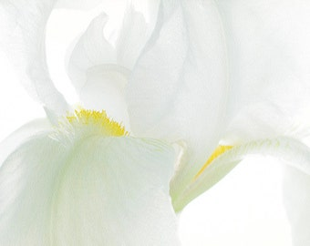 White Iris Print, Floral Art Print, Cottage Chic  Wall Decor, Iris Flower Photography
