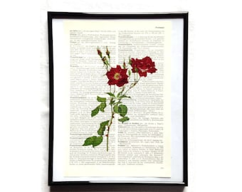 Rose 3 vintage art print encyclopedia old book pages image poster