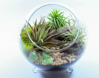 Air Plant Terrarium Kit - Beautiful Footed Orb Terrarium Features 3 Living Tillandsia, Driftwood, Moss, Sand, Pebbles and More. DIY Gift