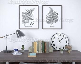 Vintage fern illustration, Set of fern prints, Black and white botanical print, Antique print, Home wall art, Fern decor, Printable fern