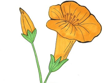 Original Art - Drawing of a Yellow Trumpet Flower - Prismacolor Markers and Ink - Botanical Art