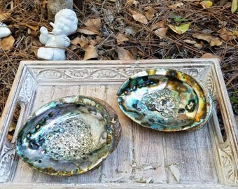 Abalone Shell  Smudge 6""