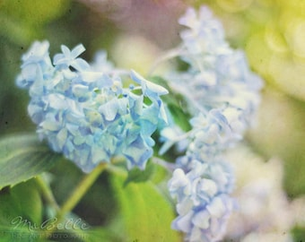 Spring Flower Photography - Hydrangea 3 - 8x10 fine art print - blue green yellow lavender pastel floral bokeh cottage chic home decor
