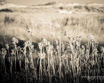 wall art, home decor, Fine Art Photography Print - sand dune, sea oat, monotone print - BEING STALKED
