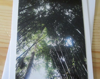 Tall Trees II Blank Greeting Card Photography