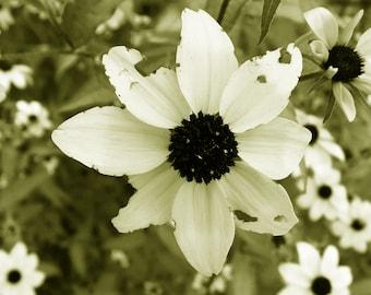 The Damaged Flower