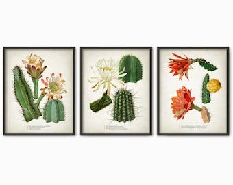 Cactus Print Set Of 3 - Vintage Cactus Illustration - Cacti Wall Art - Botanical Home Decor - Antique Cactus Book Plate Illustration - AB547