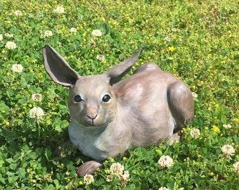 Harrison the Cottontail Rabbit