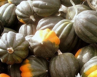 Table Queen Acorn Winter Squash Heirloom Seeds - Non-GMO, Open Pollinated, Untreated