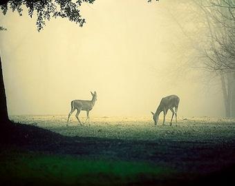 Deer Photography, Dreamy Animal Photo, Wildlife Decor, Texas, Fog Photography, Fairytale Print