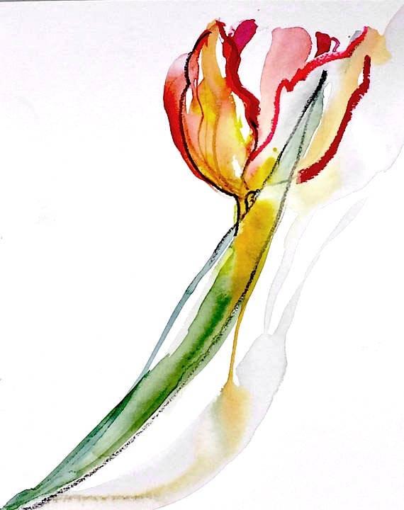 Watercolor painting -Parrot Tulip-original botanical study