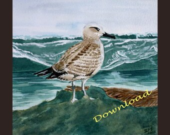 Download - Seagull  - bird