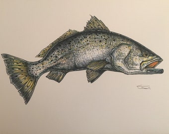 Spotted Seatrout Print