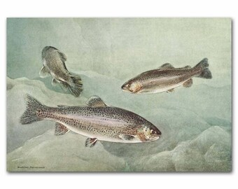 "Rainbow Trout Print, Lake Decor (1930s Fish Art, Fishing Gifts for Men) --- ""Rainbow Trout"" No. 120"