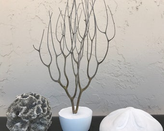 Dried Branch, Gray Sea Rod Ocean Plant, Nautical Decor, Beach Theme.
