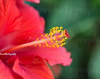 Beautiful Hibiscus Flower, Tropical Photography, Floral Print, Macro, Flower Petals, Home Decor, Wall Art, Living Room Decor, Bedroom Art,