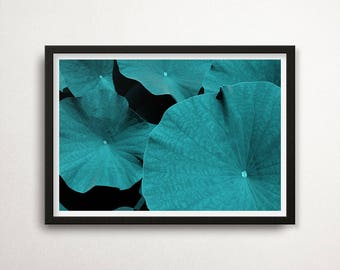 Tropical Leaves Print, Leaf Wall Art, Leaves Photo, Instant download, Nature Photography, Rain Forest, Tropic decor, Nature Wall Art, Decor