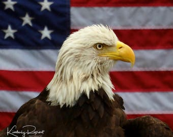 National Symbols - Nothing says America like our Flag and National Bird, the Bald Eagle.