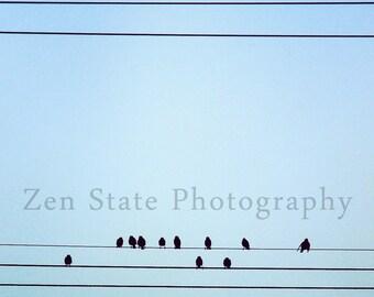 Bird on a Wire Photography Print. Wildlife Photography. Bird Photo Print. Nature Wall Art. Unframed Print, Framed Print, Canvas Art Print.