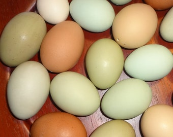 1 Dozen Real Organic Natural  Hand Blown Eggs  Naturally Colored Eggs for Crafts or home & living decor