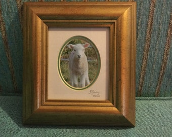 Lamb photo in a frame. Approx 20cm by 22 cm