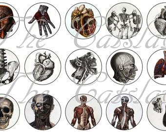 "Anatomy Pins, Anatomy Magnets, Anatomy Badges, 1"" Inch  Flat Backs, Hollow Backs, Vintage Medical Anatomy"
