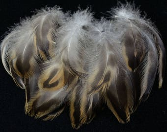 set of 20 rouen duck flank feathers