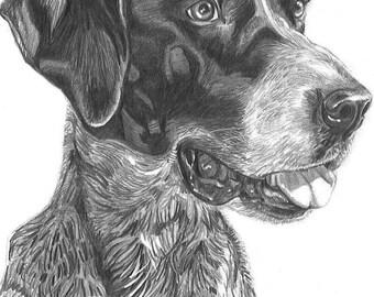 """8""""x10"""" graphite pencil pet portrait"""