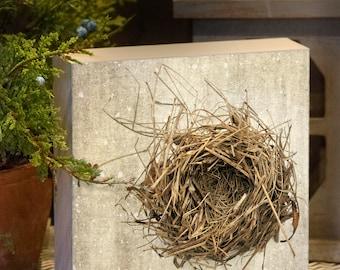 Leere Nest