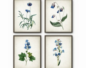 Blue Flowers Wall Art Print Set of 4 - Cornflower - Blue Flower Print - Boho Art - Blue Room Decor - AB467