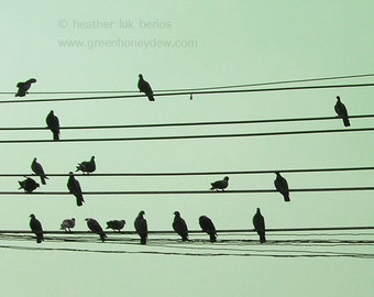 Birds on Wire Photography - Wildlife - Fine Art Photography - Modern Apartment Contemporary