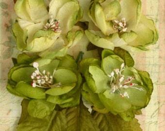 Petaloo Botanica Blooms Pistachio