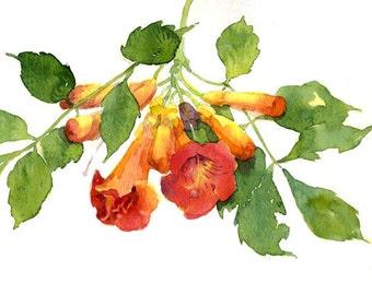 Orange Trumpet Vine Blossoms Archival Print