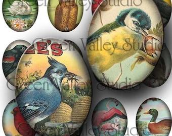 INSTANT DOWNLOAD Digital Collage Sheet Vintage Bird Illustrations Ducks Owls Swans Large Ovals 30 x 40 mm for Pendants Magnets Crafts (OL11)