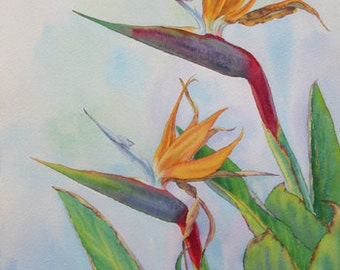 Classic Botanical Plein Air Watercolor Painting of Bird of Paradise Flowers by Elena Roché