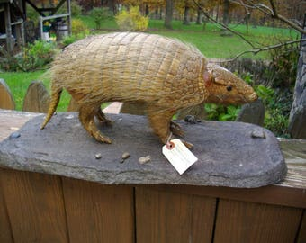 RARE Screaming Hairy Armadillo Lifesize Mount/South America/Taxidermy/Argentina