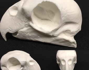 Parrot skull replica