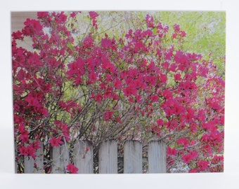 Azalea Note Cards, Blank Notecards, Flower Note Cards, Greeting Cards, Single Note Card, Blank Note Card, All Occasion Cards